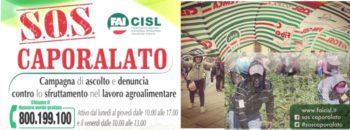 Al via la campagna FAI Cisl per combattere il caporalato: nuovo numero verde per raccogliere denunce