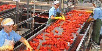 Sabato 28 ottobre giornata di mobilitazione Fai Cisl per un'agenda di riforme del settore agroalimentare
