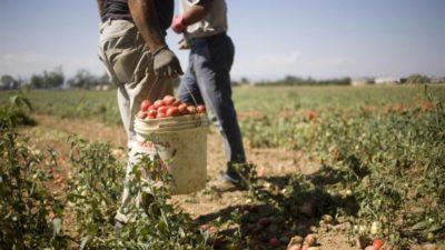Agricoltura: accordo regionale tra Felsa Cisl, Nidil Cgil, Uiltemp e Synergie Italia per l'utilizzo di 600 lavoratori in somministrazione